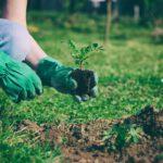 Een nieuwe tuin van hovenier Oosterhout